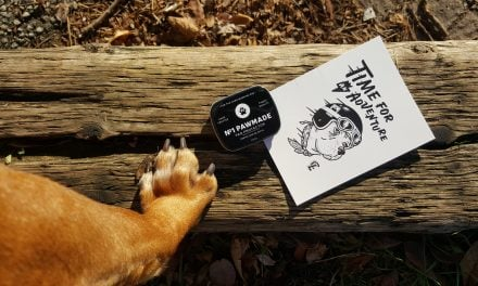 Lifestyle | Canela is Adventure Ready With Loyal Canine Co.